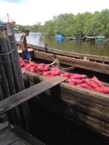 Diburu Polisi, Nahkoda Pengangkut 14 Ton Bawang Selundupan di Dumai Nekat Tenggelamkan Kapal