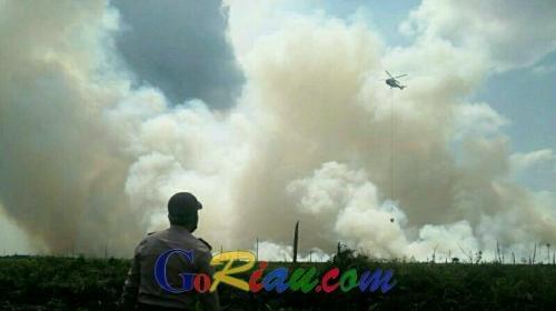 UPT DLHK Riau KPH Sorek Ungkap Luas Lahan Terbakar di Merbau Pelalawan Mencapai 20 Hektare Lebih