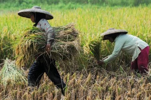 Nilai Tukar Petani Riau Masih Tertinggi di Sumatera