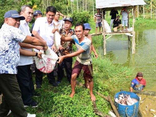 Selain Kampar, Ini Kabupaten di Riau yang Berpotensi Kembangkan Budidaya Ikan Patin