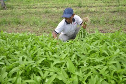 Masa Pandemi Covid-19, Herman Siswanto Kembangkan Pertanian Hortikultura dan Raih Untung Rp18 Juta per Bulan