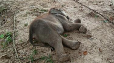 Lebih 360 Gajah Mati Misterius dalam 3 Bulan Terakhir
