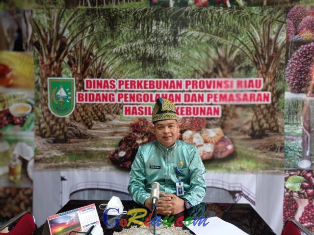 Tertinggi Sepanjang Sejarah, Harga TBS Kelapa Sawit di Riau Sentuh Rp2.762,70 per Kg