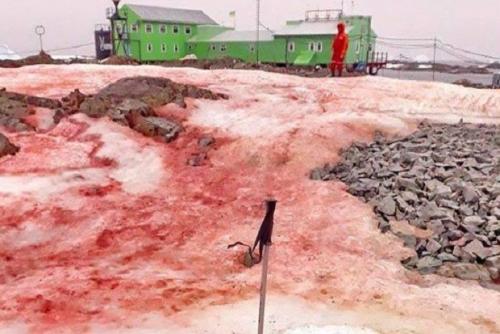 Menyeramkan, Salju Darah Tutup Sebagian Antartika, Ini Penampakannya