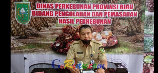 Sentuh Harga Tertinggi Sejak 11 Tahun Terakhir, TBS Kelapa Sawit di Riau Dibayar Rp2.517,13 per Kg