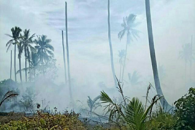 Kebakaran Lahan di Kuala Kampar Pelalawan Mulai Padam, Pagi Ini Tinggalkan Asap