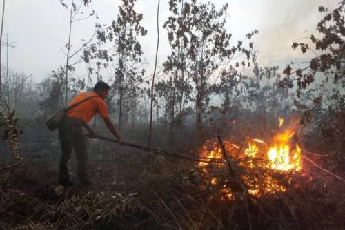 BPBD Klaim Luas Lahan Terbakar di Riau Turun 71 Persen
