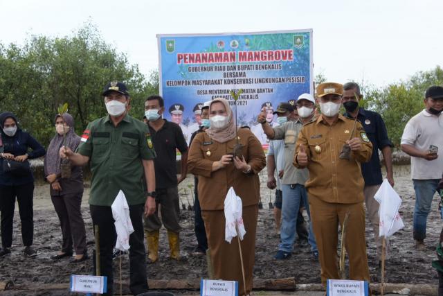 Gubri Syamsuar dan Bupati Bengkalis Tanam Mangrove dan Resmikan Agrowisata Mentayan