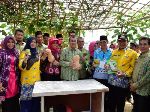 Upaya Khusus Percepatan Populasi Sapi dan Kerbau Bunting di Riau, Ini Pesan Gubri Syamsuar