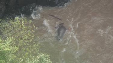 6 Gajah Mati karena Menolong Bayi yang Jatuh ke Arus Deras Air Terjun