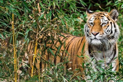 BBKSDA Riau: 80 Persen Konflik Satwa Liar dengan Manusia Terjadi di Luar Kawasan Konservasi
