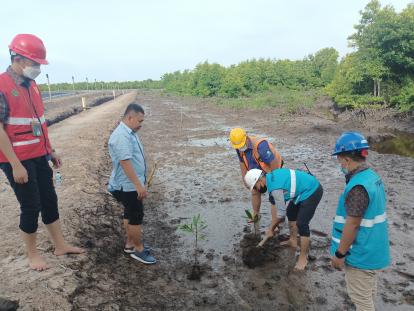 Jaga Ekosistem di Pulau Bengkalis, PT PLN Tanam Mangrove