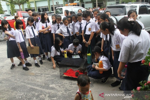 17.629 Siswa SMP di Pekanbaru Dinyatakan Lulus