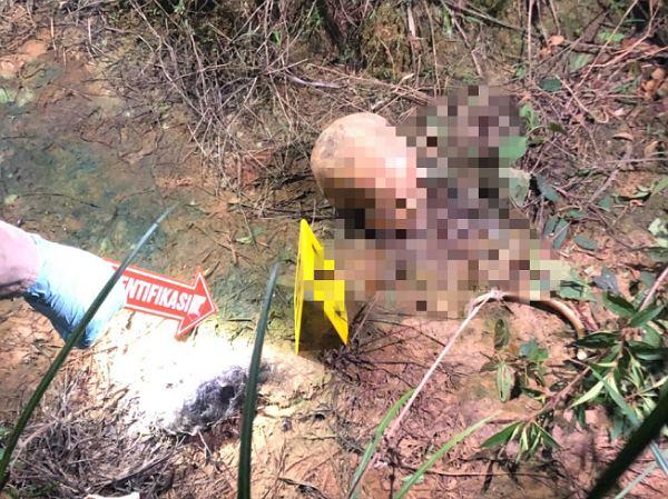 Lagi Panen Sawit, Pria di Inhu Temukan Tulang Belulang Manusia Tergeletak di Tanah