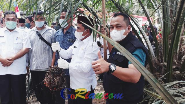 Panen Perdana Sawit Kebun Kas Desa Kiyap Jaya Pelalawan, Wabup Nasarudin: Ini Kita Galakkan