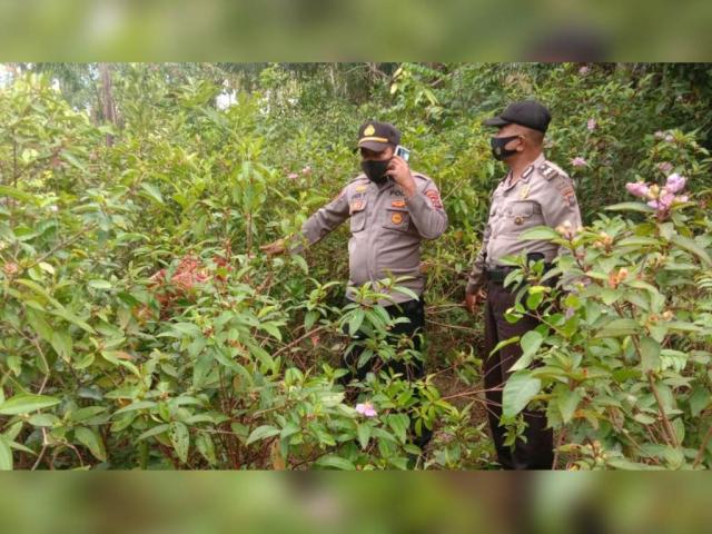Gara-gara Mengetahui Bibinya Selingkuh, Ponakan di Pesisir Selatan Dibunuh