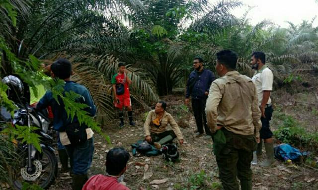 Gajah Liar yang Rusak Perkebunan Warga di Pelalawan Digiring ke TNTN