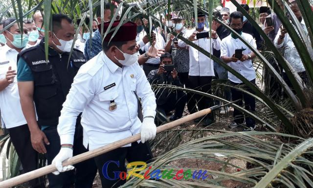 Wabup Nasarudin Peringatkan Perusahaan Perkebunan Kelapa Sawit di Pelalawan Punya NPWP Cabang