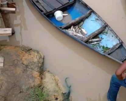 Sungai Diduga Tercemar Limbah PT SIPP, 2 Ton Ikan Mati dan 70 KK Nelayan di Duri Kehilangan Mata Pencarian
