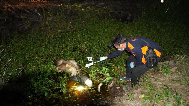 Mendaki Bukit Barisan Hingga 4,5 Jam, Polres Pelalawan Akhirnya Berhasil Ringkus Penebas Leher Pria di Langgam
