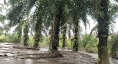 Kebunnya Tercemar Limbah Pabrik Kelapa Sawit, Warga Duri Adukan PT SIPP ke Bupati Bengkalis Hingga Gubernur Riau