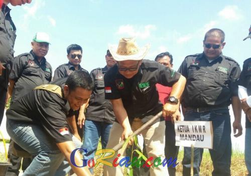Galakkan Go Green, IKMR Mandau Tanam 24 Ribu Pohon Jabon dan Sengon