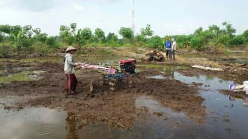 Bersihkan Lahan Tanpa Membakar, Petani Pelalawan Bisa Panen Padi 50 Ton di Areal 15 Hektare