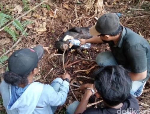 Soal Beruang Mati Kena Jerat di Kawasan Konsesi, BBKSDA Riau Minta Perusahaan Bertanggungjawab Lindungi Satwa