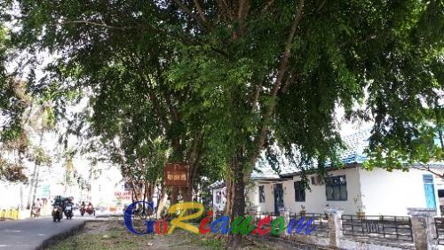 Dinas LHK Segera Pangkas Pohon Pelindung Jalan yang Sudah Lapuk dan Terlalu Rimbun