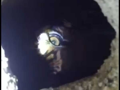 Hingga Siang Ini, Harimau yang Terjebak dalam Kolong Ruko di Inhil Belum Dievakuasi