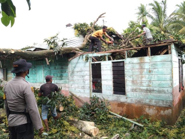 Rumah Warga Desa Alai Rusak Ditimpa Pohon Mangga, BPBD dan Kepolisian di Kepulauan Meranti Respons Cepat Bantu Evakuasi