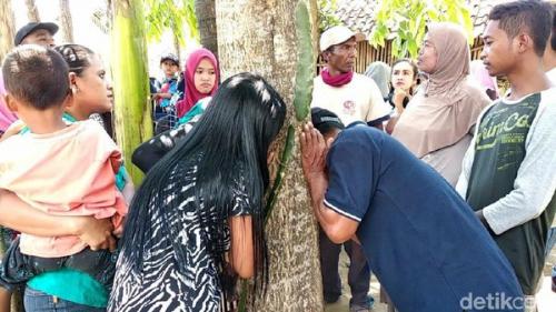 Pohon Menangis Hebohkan Warga Jember, Begini Penjelasan Ahli Biologi