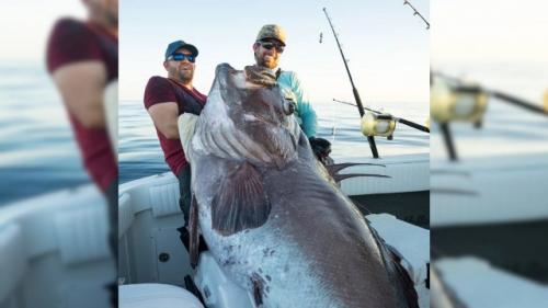 Pemancing Berhasil Tangkap Ikan Kerapu Raksasa, Panjang 2 Meter dan Berat 150 Kg, Ini Penampakannya
