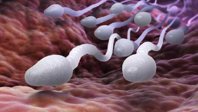 Pasutri Harus Kontrol Kolesterol Bila Ingin Segera Punya Momongan, Ini Penjelasannya