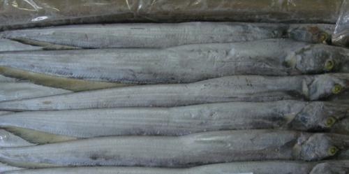 Ada Patogen Virus Corona pada Kemasan, Produk Ikan Beku Asal Sumut Dilarang Masuk China