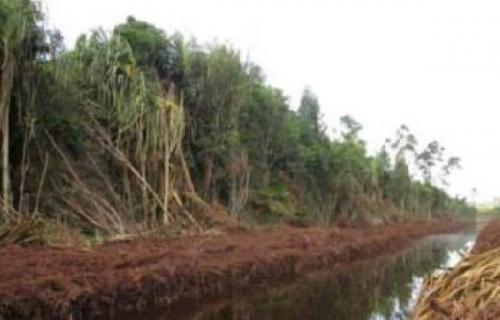 Riau Harus Waspadai Banjir di Lahan Gambut, Bisa Tenggelamkan Pemukiman