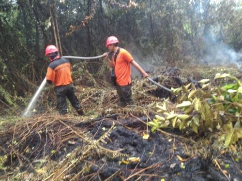 79 Titik Panas Terdeteksi di Sembilan Wilayah di Riau, Terbanyak di Kepulauan Meranti dan Pelalawan