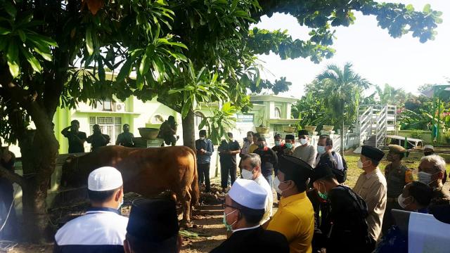 Gubernur Riau Serahkan Sapi Kurban Presiden untuk Disembelih di Masjid Agung An-Nur
