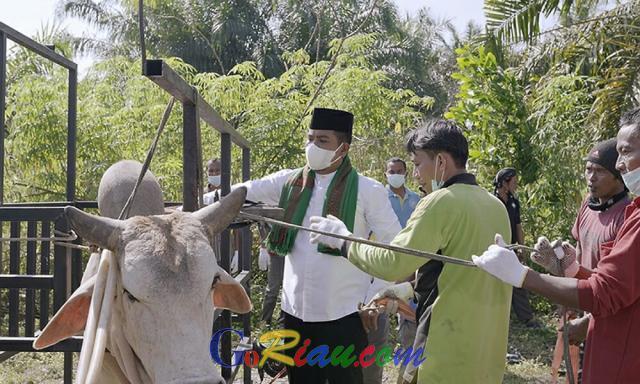 Hari Raya Idul Adha 1442 Hijriah, Pemkab Pelalawan Sembelih 11 Ekor Sapi Kurban