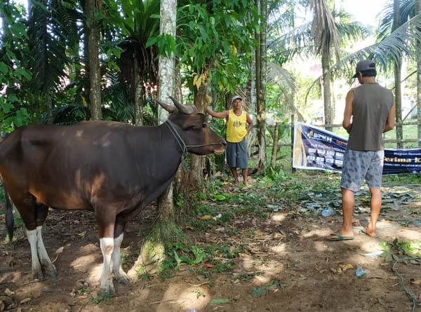 BPKH Kembali Salurkan Hewan Kurban Melalui LazisMu Riau
