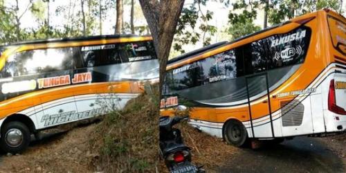 Gunakan GPS, Bus Tungga Jaya Tersesat di Tengah Hutan dan Terjepit Pepohonan Besar, Begini Ceritanya
