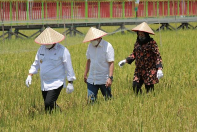 Padi Kaya Gizi Bantu Menutrisi Anak Stunting di Riau