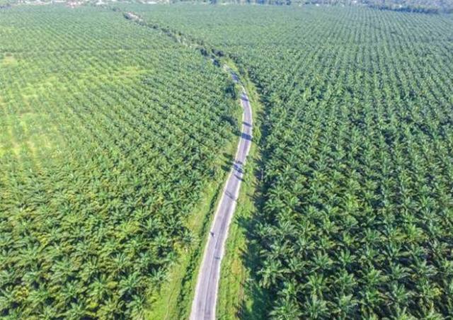 Pemprov Riau Belum Bisa Eksekusi 1,2 Juta Hektare Perkebunan Ilegal di Kawasan Hutan, Ini Penyebabnya