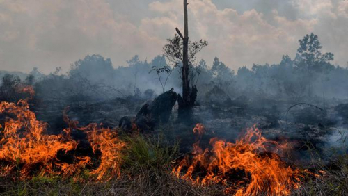 Periode 2018-2019, Indonesia Kehilangan Hutan 462.400 Ha Akibat Konversi dan Karhutla