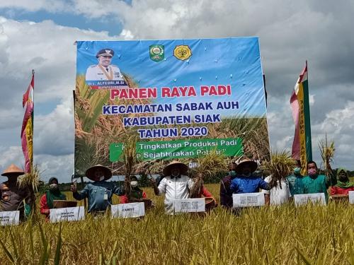 Padi Seluas 208 Hektar di Kampung Laksamana Dipanen, Alfedri: Hasilnya Mencapai 1.248 Ton