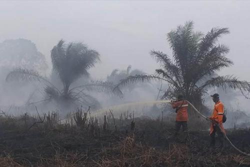 Polda Riau Tetapkan 70 Tersangka Karhutla, 3 Korporasi Disidik