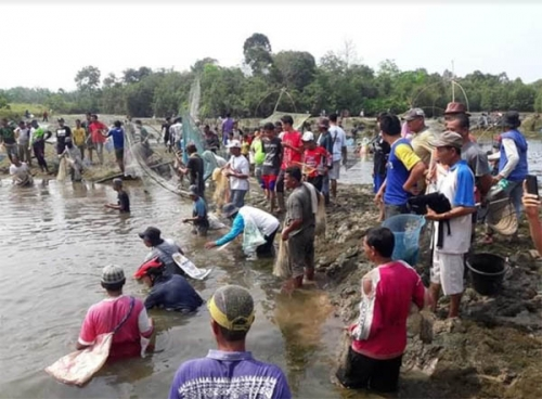 Ratusan Masyarakat Perambahan Kampa Mencokau Ikan di Sungai Larangan