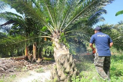 Temukan Kebun Sawit di Suaka Margasatwa Giam Siak Kecil, KSDA Riau Langsung Potong dan Pasang Spanduk
