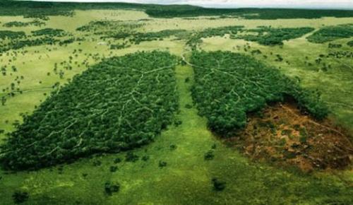 Jokowi Centre Riau Minta BPN Tunda Proses Permohonan Hak Tanah Pasca Perubahan RTRW Riau