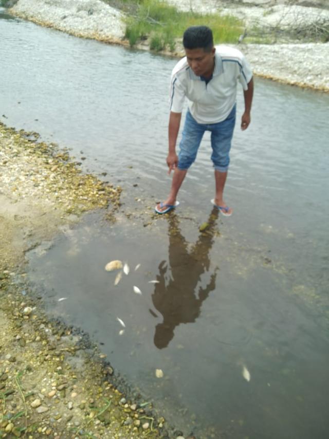 Diduga Limbah PKS ASMJ Bocor, Air Sungai Bawang di Jake Kuansing Berwarna Hitam dan Banyak Ikan Mati